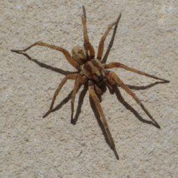 Уничтожение пауков в Екатеринбурге